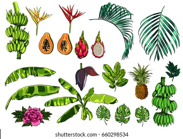 Vector tropical exotic leaves, fruits and flowers, realistic jungle collection.