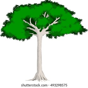 vector tropical jungle rainforest Kapok tree