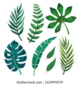 Vector tropical leaves on white background.