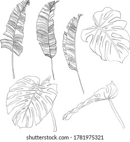 Vector tropical linear set with banana and monstera black leaves. Hand painted palm branches and twigs isolated on white background. Floral jungle illustration for design, print or background.