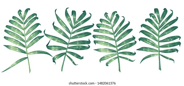 Vector tropical palm leaves. Jungle leaves set isolated on white background.Exotic elements for wedding or summer background, patterns, wallpapers, fabric, wrapping paper. Realistic style, hand drawn.