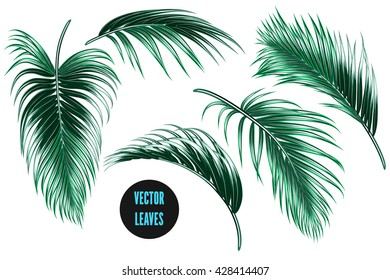 Vector tropical palm leaves, jungle leaves set isolated on white background, botanical illustration