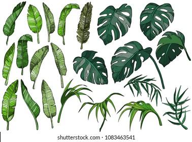 Vector tropical palm leaves set, jungle plants