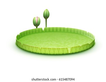 Vector tropical plant Giant Amazon Water Lily pad or huge floating lotus Victoria Amazonica isolated on white background