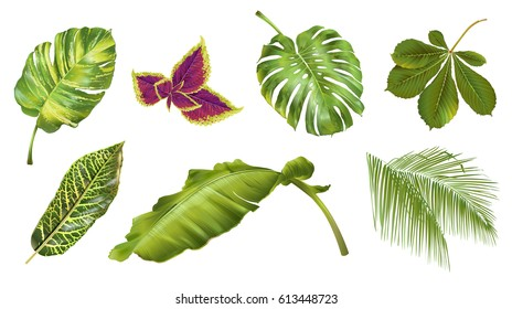 Vector tropical plants and leaves realistic set isolated on white background. Botanical exotic elements for spa, summer, exotic, hawaiian style or wedding design