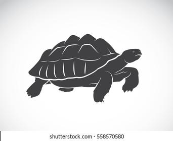 Vector of a turtle on white background. Reptile. Wild Animal. (Geochelone sulcata)