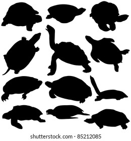 Vector Turtle Silhouettes