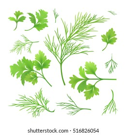 Vector twigs of dill and parsley