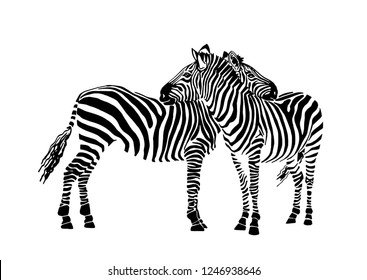 Vector two  zebras standing isolated on white background,graphical sketch, striped couple