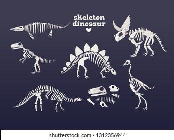 Vector tyrannosaurus, diplodocus, triceratops dinosaur fossil skeleton set. Prehistoric predator, jurrasic giant animal icon. Paleontologu and archeology artifact. T-rex monster white silhouette.