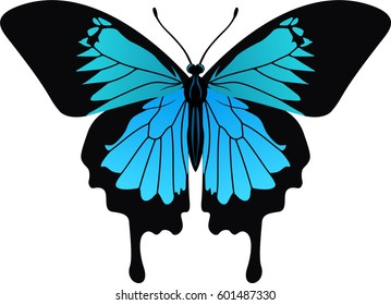 vector Ulysses butterfly from Indonesia