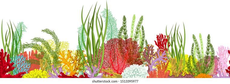Vector underwater coral reef horizontal  seamless pattern. Undersea bottom texture.