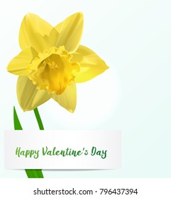 Vector Valentine background with jonquil