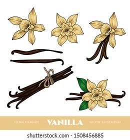 Vector vanilla  hand drawn sketch. Vintage style