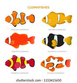 Vector of various clownfish species on isolated white background
