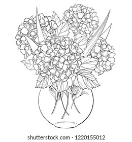 Vector vase with bouquet of outline Hydrangea or Hortensia flower bunch and ornate leaves in black isolated on white background. Contour garden plant Hydrangea for summer design and coloring book.