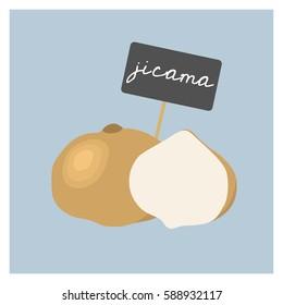 Vector Vegetable - Jicama