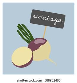 Vector Vegetable - Rutabaga