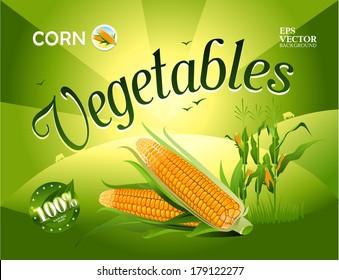 Vector vegetables. Corn