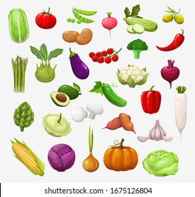 Vector vegetables and salads. Tomato, pepper and broccoli, onion and pea, cabbage and zucchini, chilli, garlic and radish, cauliflower, mushroom and pumpkin, corn, olives, eggplant and avocado