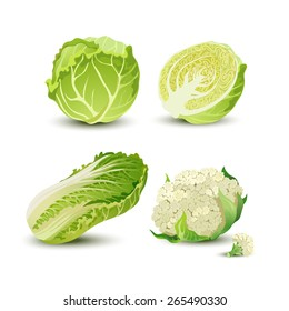 Vector vegetables set with cabbage, cauliflower and Chinese cabbage