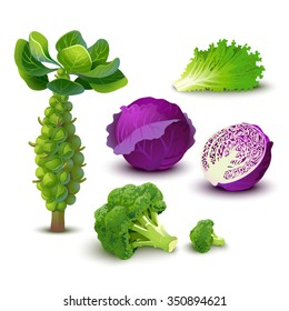 Vector vegetables set with red cabbage, broccoli, kale and brussels sprouts. Isolated.