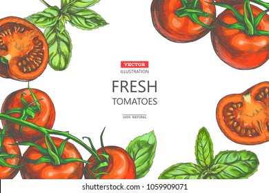 Vector vintage background with fresh vegetables border on white. Color hand drawn illustration with tomatoes on vine and basil leaves in sketch style. Template for label or card design