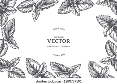Vector vintage background with peppermint border. Hand drawn botanical texture with mint leaves in engraving style.