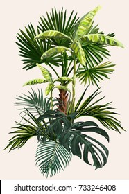 Vector vintage composition with exotic leaves, palm trees, banana trees. Botanical classic illustration. Perfect for wallpapers, web page backgrounds, surface textures, textile.