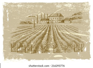vector vintage hand drawn illustration of wineyard
