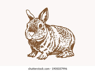 Vector vintage illustration of bunny , graphical drawing