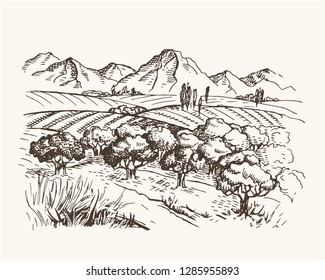 Vector vintage illustration with field, mountains and olive trees