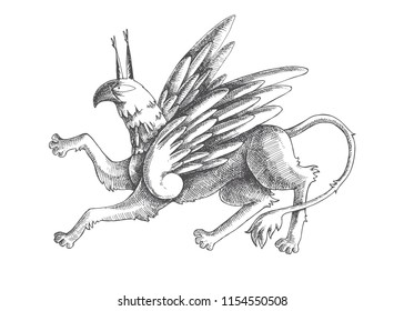 Vector vintage illustration of griffin isolated on white. Hand drawn medieval gryphon in engraving style. Fairy beast.