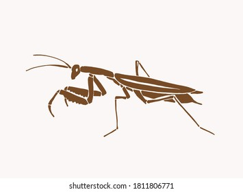 Vector vintage illustration of mantis , sepia background, graphics