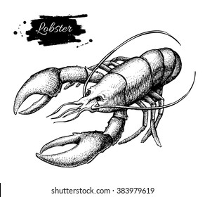 Vector vintage lobster drawing. Hand drawn monochrome seafood illustration. Great for menu, poster or label.