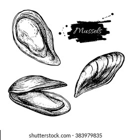 Vector vintage mussel set drawing. Hand drawn monochrome seafood illustration. Great for menu, poster or label.