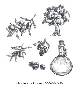 Vector vintage olive set isolated on white. Hand drawn illustrations of tree, branches with leaves and black fruits and bottle of oil in engraving style. Sketch with plants and pitcher.