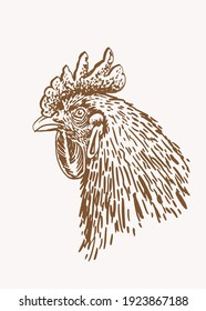 Vector vintage portrait of rooster,sepia background,illustration