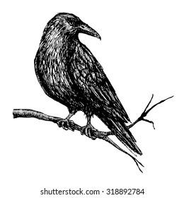 Vector vintage raven. Hand drawn illustration.
