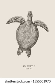 Vector vintage Sea Turtle. Excellent for the design of postcards, posters, stickers and so on.