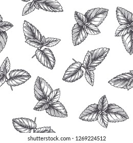 Vector vintage seamless pattern with mint leaves in engraving style. Hand drawn botanical texture with peppermint tips isolated on white. Black and white sketch. Herbal ingredient