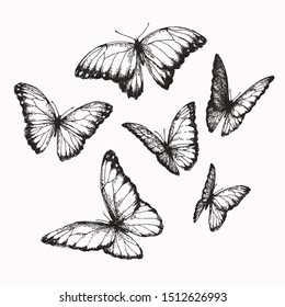 Vector vintage set of butterflies with different positions of wings in engraving style. Hand drawn illustration of nymphalid isolated on white.