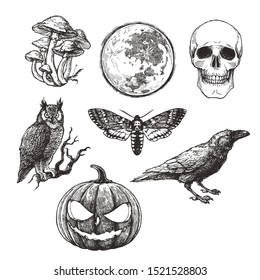 Vector vintage set of Halloween symbols in engraving style. Hand drawn illustration with skull, pumpkin, full moon, raven, death head moth and owl isolated on white.