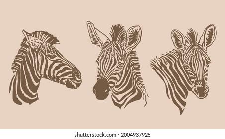 Vector vintage set of zebra portraits ,sepia background  ,graphical elements