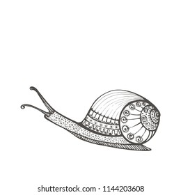 Vector vintage snail decorated with ornament isolated on white background. Vintage hand drawn vector illustration. Snail Achatina, garden snail for children or for adult anti stress coloring book.