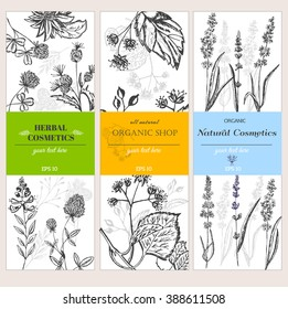 Vector vintage template label with hand draw flowers and herbs. Layout, mockup design for honey, cosmetics shop, beauty salon, natural and organic products. Organic plants sketch background.