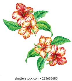 vector vintage tropical hibiscus bouquet isolated on white.  Floral composition may be suitable for fashion or stationery print. watercolor illustration.