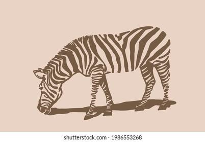Vector vintage zebra ,sepia background, hand drawn illustration