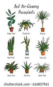 Vector visual guide of best air-cleaning indoor plants. Hand drawn houseplants that filter pollutants from the air. Beautiful floral design elements.