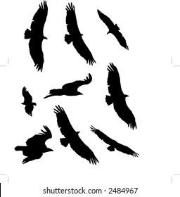 Vector vulture silhouette